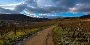 Path through the vineyards in Alsace. Vineyard path near Mittelbergheim in Alsace in France stock photography