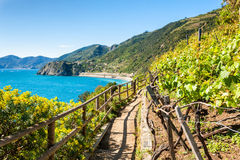 Path in vineyards, beautiful view of the sea