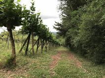 Path of Vineyards and Nature royalty free stock images