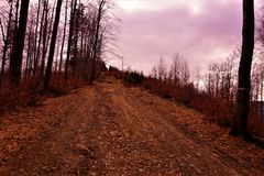 Path, walking in the forest. Poland, Europe royalty free stock image