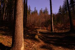 Path, walking in the forest. Poland, Europe stock photography