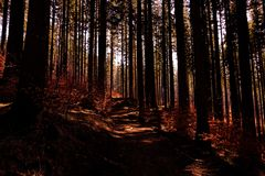 Path, walking in the forest. Poland, Europe stock image