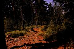 Path, walking in the forest. Poland, Europe royalty free stock images