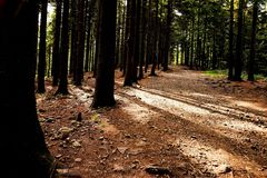 Path, walking in the forest. Poland, Europe stock images