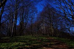 Path, walking in the forest. Poland, Europe royalty free stock photos
