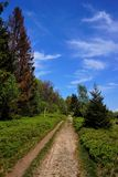 Path, walking in the morning. Poland, Europe royalty free stock images