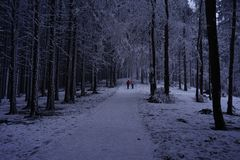 Path, walking in the morning. Winter View, Poland, Europe royalty free stock images