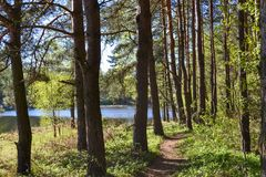 Path for walks in the forest park near the river. Spring early morning. Russia Royalty Free Stock Photography