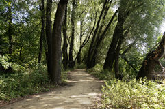 Path in Warsaw town forest Royalty Free Stock Photos