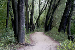 Path in Warsaw town forest Royalty Free Stock Image