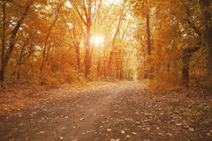 Path way in autumn forest Stock Photo