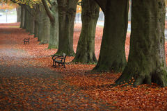 A path way in Autumn Stock Images