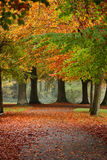 A path way in Autumn Royalty Free Stock Image