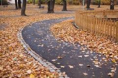Dry, golden leaves stock photo
