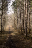 Path way in the forest late afternoon in early spring Royalty Free Stock Image