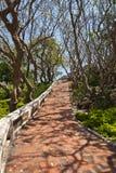 Path way with frangipani Royalty Free Stock Photos