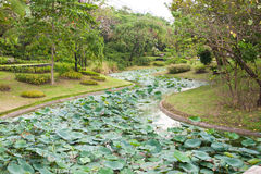 Path way of lotus leaf in park Stock Photo