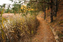 Path Way Pathway In Autumn Forest. Stock Photography
