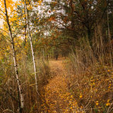 Path Way Pathway In Autumn Forest. Stock Photo