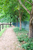 Path way with trees Royalty Free Stock Photos
