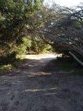 Path way trees stock photography