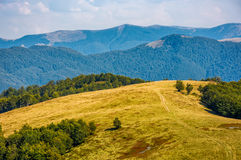 Path through weathered grassy alpine meadow. Near the beech forest on top of a hill. beautiful mountains scenery on early autumn sunny day Stock Photo