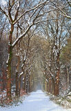 Path in white snow winter forest Stock Images