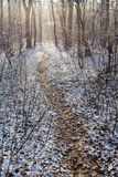 Path in white snow through winter forest Royalty Free Stock Photo