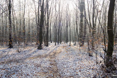 Path in white snow through winter forest Stock Images