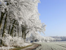 Path with white trees. In winter Stock Images