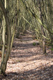 Path through the wild forest Royalty Free Stock Photography