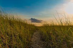 Path through the Wild Grass stock images