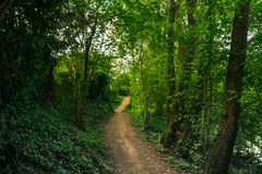 Path in the wild vegetation Stock Image