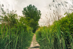 Path in the wild vegetation Stock Photos