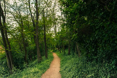 Path in the wild vegetation Royalty Free Stock Photography