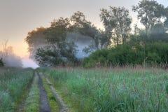 Path wild vegetation Stock Image