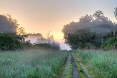 Path wild vegetation Stock Photography
