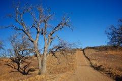 Path Through Wilderness Royalty Free Stock Image