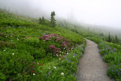 Path through the Wildflowers Royalty Free Stock Photos