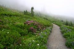 Path through the Wildflowers Royalty Free Stock Photos