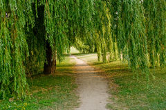 Path and Willow Royalty Free Stock Image