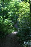 Path winding its way through a thick forest. Path winding its way through a dense forest, with thick undergrowth foliage hemming it in on both sides. The Stock Photos