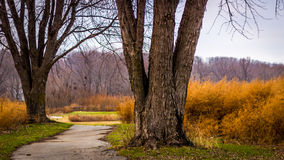 Path winding Through Overgrown Golf Course Stock Photo