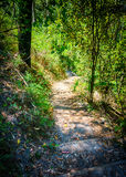 Path Winding Through the Woods Stock Photography