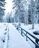 Path in winter Stock Photos