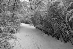 Path in Winter. A hiking path leads through the snow covered bushes and forest Royalty Free Stock Photography