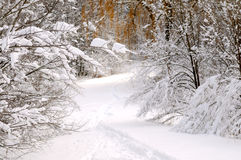 Path in winter forest Royalty Free Stock Images