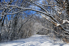 Path in winter forest Stock Image