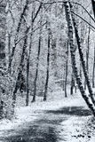 Path in winter forest. A path leading among the trees in winter forest Royalty Free Stock Image