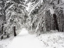 Path in winter forest Stock Photo